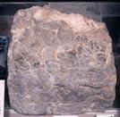 Image of Stromatolite